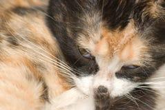 behandla som ett barn katten Royaltyfri Foto