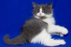 Behandla som ett barn katten Royaltyfri Fotografi