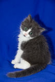 Behandla som ett barn katten Royaltyfria Bilder