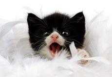 behandla som ett barn katten Arkivfoto