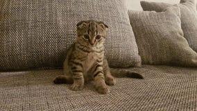 Behandla som ett barn katten fotografering för bildbyråer