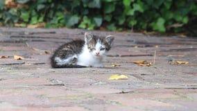 Behandla som ett barn katten som bara sitter på kullersten på en lantgård lager videofilmer