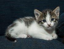Behandla som ett barn katten som har gyckel Royaltyfria Bilder