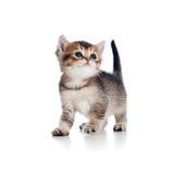 behandla som ett barn katten som uppåt ser månad gammal Arkivbild