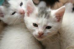 behandla som ett barn katter Fotografering för Bildbyråer