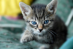 behandla som ett barn kattståenden Royaltyfri Foto