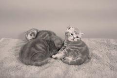 Behandla som ett barn kattungar Royaltyfri Fotografi