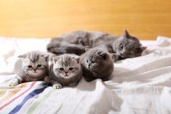 Behandla som ett barn kattungar, första dagar av liv arkivfoton