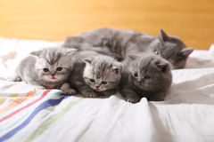 Behandla som ett barn kattungar, första dagar av liv Royaltyfri Bild