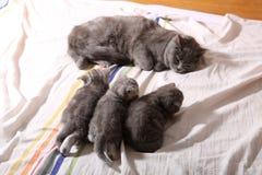 Behandla som ett barn kattungar, första dagar av liv Royaltyfria Foton