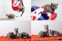 Behandla som ett barn kattungar som spelar med en Storbritannien flagga, multicam royaltyfri foto