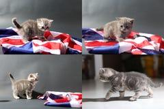 Behandla som ett barn kattungar som spelar på mattan och med den Storbritannien flaggan, multicam royaltyfri foto