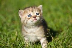 Behandla som ett barn kattungen Arkivfoto