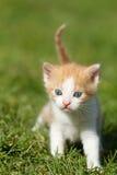 Behandla som ett barn kattungen Royaltyfri Foto