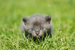 Behandla som ett barn kattungen Royaltyfria Foton