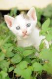 Behandla som ett barn kattungen bland det gröna gräset Arkivbild