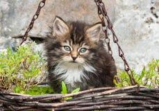 Behandla som ett barn kattungen i en hängande korg Royaltyfri Fotografi