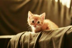 Behandla som ett barn kattungen i solnedgånglampa Arkivfoto
