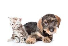 Behandla som ett barn kattungen och valpen som tillsammans ligger bakgrund isolerad white Arkivfoton