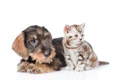 Behandla som ett barn kattungen och valpen tillsammans bakgrund isolerad white Arkivfoto