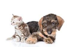 Behandla som ett barn kattungen och valpen som tillsammans ligger Isolerat på den vita backgrouen Royaltyfri Fotografi