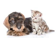 Behandla som ett barn kattungen och valpen tillsammans På vitbakgrund Fotografering för Bildbyråer
