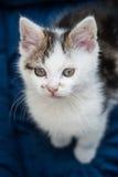 Behandla som ett barn kattungen som ser upp Arkivfoton