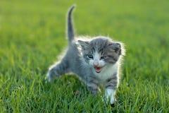 Behandla som ett barn kattungen utomhus i gräs Royaltyfri Fotografi
