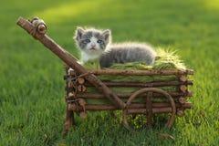 Behandla som ett barn kattungen utomhus i gräs Arkivfoto