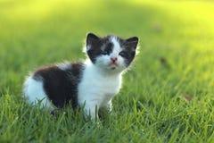 Behandla som ett barn kattungen utomhus i gräs Royaltyfri Foto