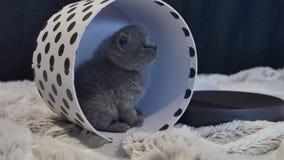 Behandla som ett barn kattungenederlaget i en rund ask lager videofilmer