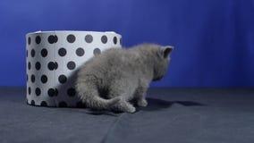 Behandla som ett barn kattungenederlaget i en rund ask stock video