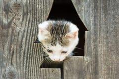 Behandla som ett barn Kitty Cat Portrait arkivfoton