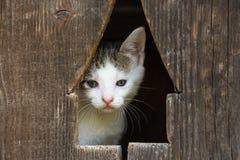 Behandla som ett barn Kitty Cat Portrait Arkivbild