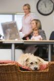 behandla som ett barn kvinnor för kontor två för hunden home liggande Royaltyfri Bild