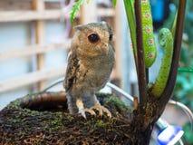 Behandla som ett barn länge gå i ax Owl Perching arkivbilder