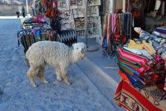 behandla som ett barn lamaen nära souvenirstand Royaltyfri Fotografi