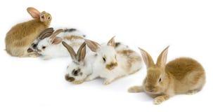 behandla som ett barn lilla kaniner royaltyfria foton
