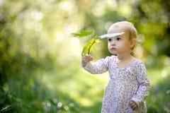 behandla som ett barn lilla lönnar för skogholdingleaves Arkivfoto