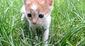 Behandla som ett barn lite katten Arkivfoto