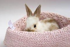 behandla som ett barn little kanin Arkivfoto