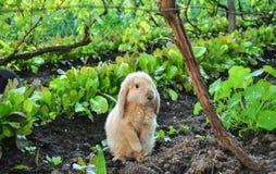 behandla som ett barn little kanin Royaltyfria Bilder