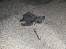 Behandla som ett barn luckan för havssköldpaddan Arkivfoton
