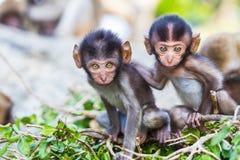 Behandla som ett barn macaquen arkivbilder