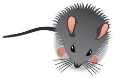 Behandla som ett barn musen Royaltyfria Bilder