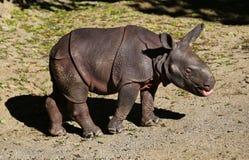 Behandla som ett barn noshörningen Arkivbild