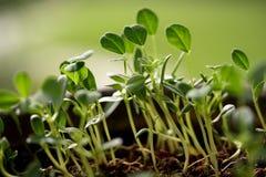 behandla som ett barn nya växter för livstid Royaltyfria Bilder