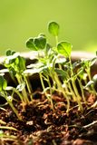 behandla som ett barn nya växter för livstid Arkivbild