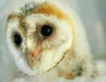 behandla som ett barn owlen royaltyfri bild