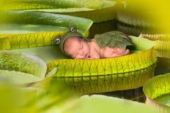 Behandla som ett barn på ett victoria regina lotusblommablad Arkivfoto